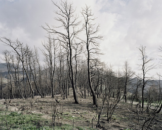 Zacharo <br>forest fire in the southern Peloponnesus, Greece <br>diploma thesis 2008